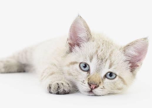 Beratung Katzen