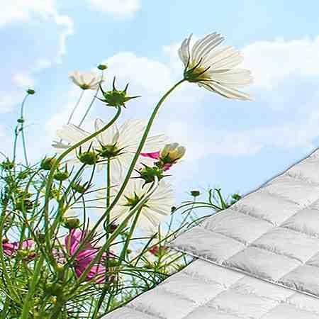 Bettdecken & Kopfkissen: Sommerbettdecken
