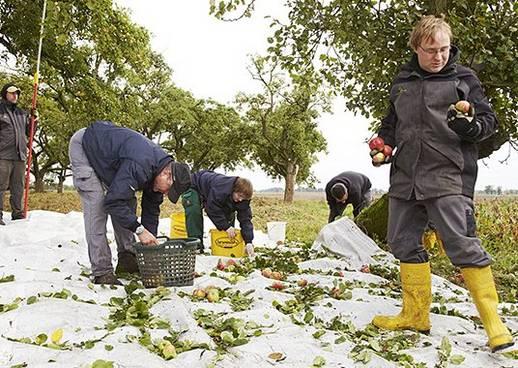 Das geld hängt an den Bäumen, Nachhaltiger Apfelsaft