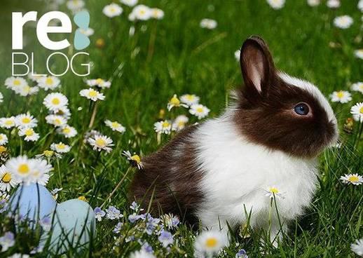 Ostern nachhaltig