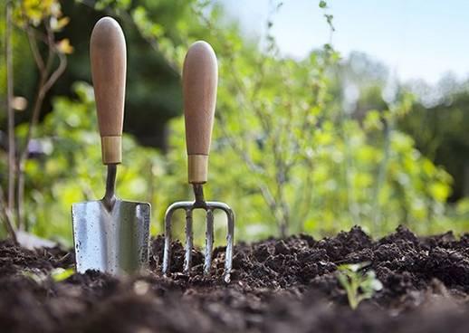 Garten Ratgeber