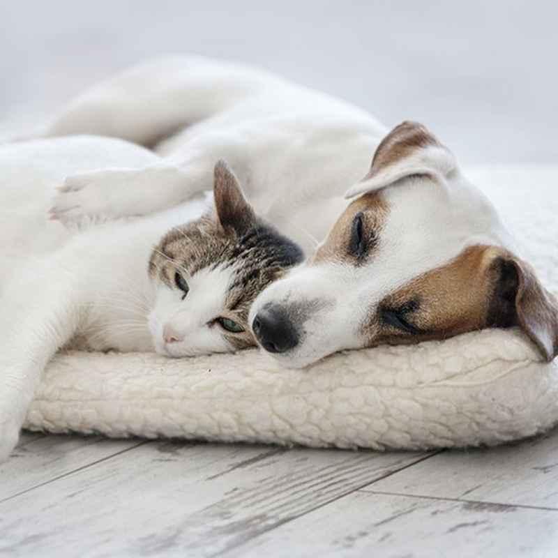 Alles für dein Haustier
