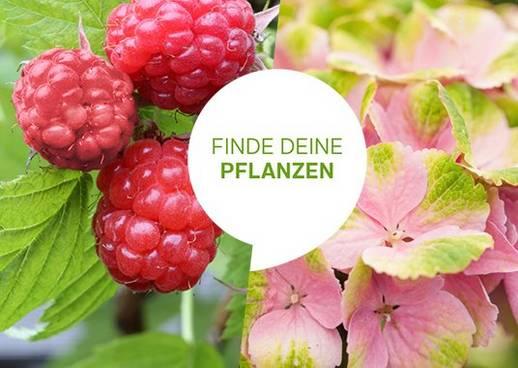 Pflanzenfinder