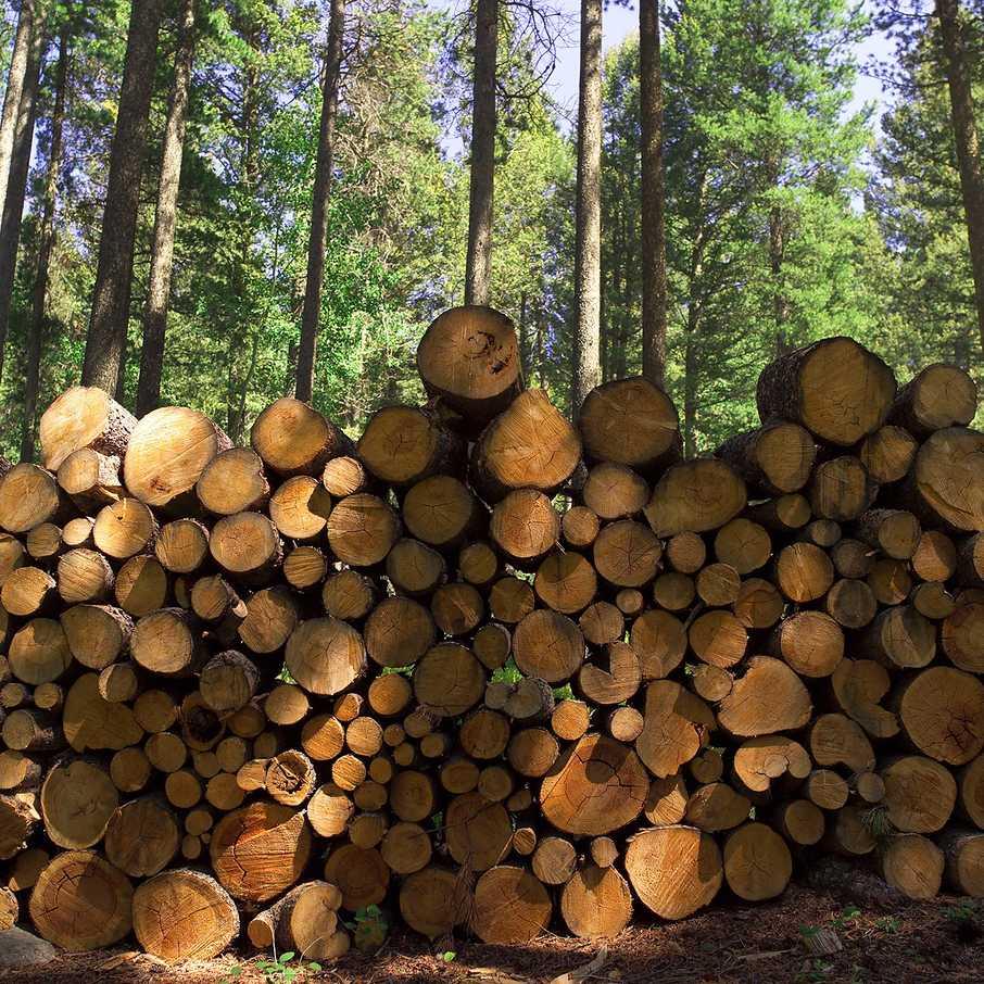 FSC-Holz