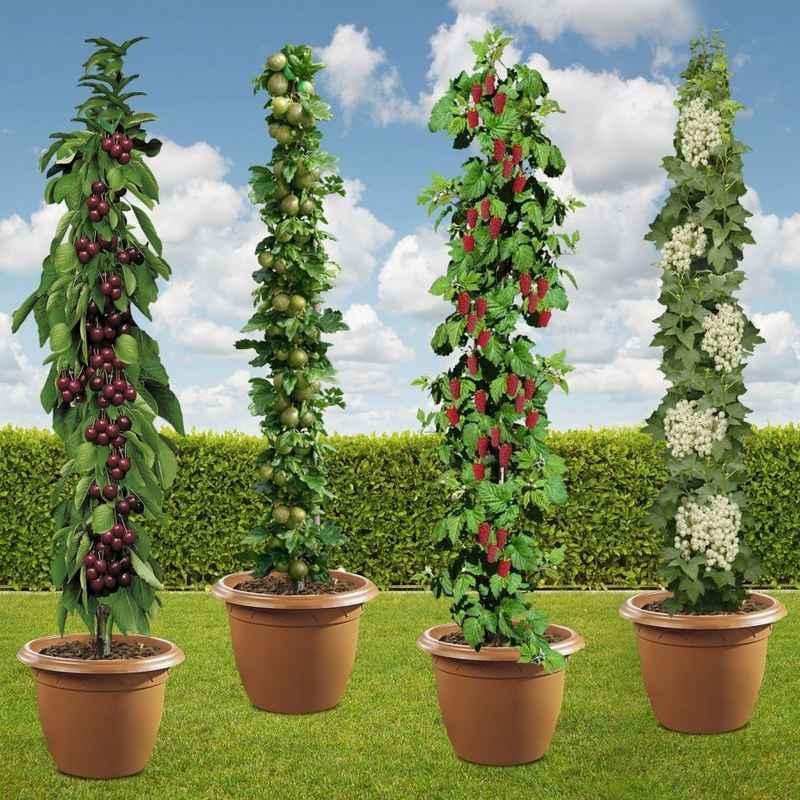 Obstpflanzen