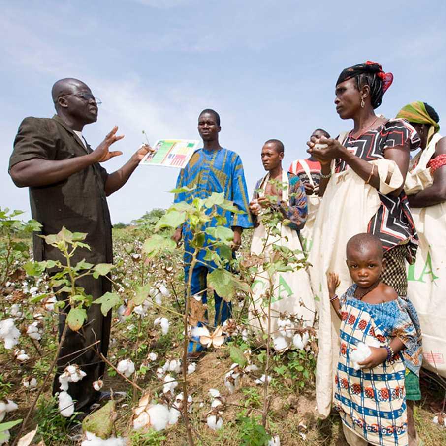 Afrikanische Frauen Michael Otto Cotton made in Africa Bauern Afrika Landwirtschaft Baumwolle Nachhaltigkeit Mosambik Bildung Wirtschaftskreislauf Stoff Baumwolle Farmer Baumwolle kaufen Baumwollanbau Frauenförderung Baumwolle Herstellung Textilunternehmen Anbaumethoden Lebensbedingungen in Afrika Textilkreislauf
