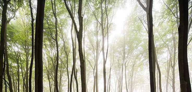 Den Wald mit lauter Bäumen sehen.