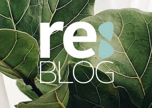 Nachhaltige Themen bei Re:Blog