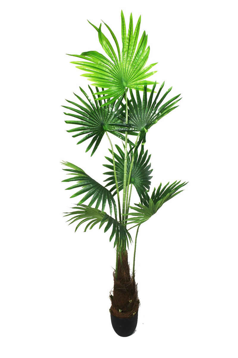 Kunstpalme »künstliche Palme Pflanze« Fächerpalme, Arnusa, Höhe 160 cm, fertig im Topf