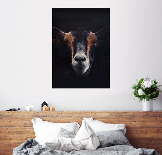 Posterlounge Wandbild, Ziegenporträt