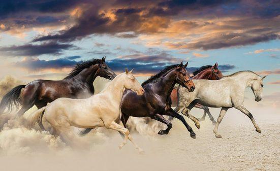 CONSALNET Fototapete »Galoppierende Pferde«, Vlies, in verschiedenen Größen