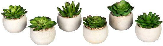 Künstliche Zimmerpflanze »Echeverien« Sukkulente Echeverien, Creativ green, Höhe 7 cm, im Zementtopf, 6er Set