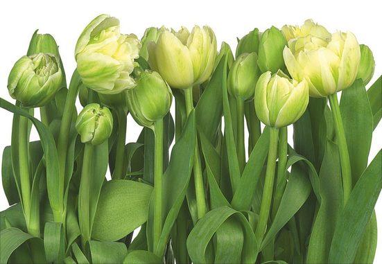 KOMAR Fototapete »Tulips«, 8-teilig