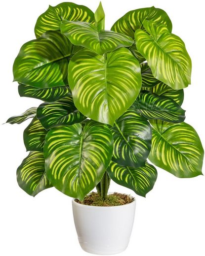 Künstliche Zimmerpflanze »Maleroy« Maranta, Home affaire, Höhe 50 cm, im Keramiktopf