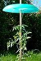 KHW Set: Pflanzenschutzdach »Tomatenhut Basis«, 3 Stk., ØxHöhe: 49x7 cm, inkl. 3 Schläuchen, Bild 2