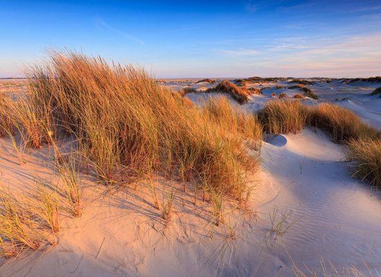 Fototapete »Dunes Grass«, glatt