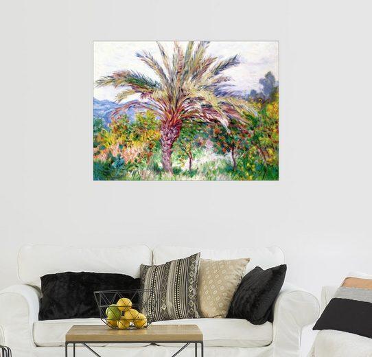 Posterlounge Wandbild, Premium-Poster Palme bei Bordighera