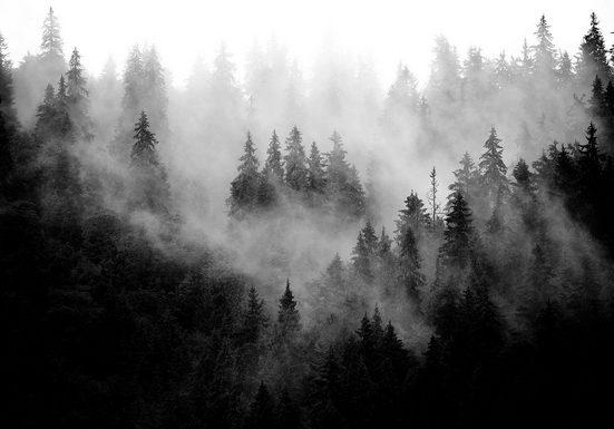 Consalnet Vliestapete »Wald im Nebel«
