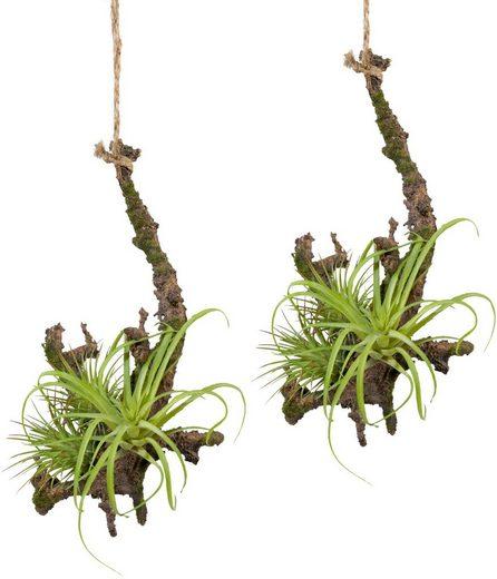 Kunstpflanze »Hängeast mit Tillandsie«, Creativ green, Höhe 15 cm, 2er Set