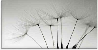 Artland Glasbild »Pusteblumen-Samen«, Blumen (1 Stück)