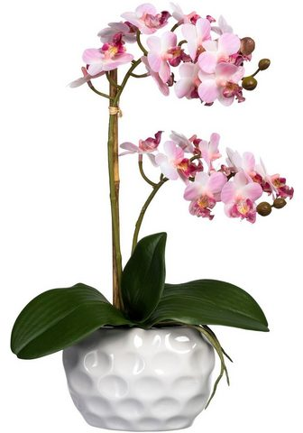 Creativ green Kunstorchidee »Phalaenopsis« Orchidee ...