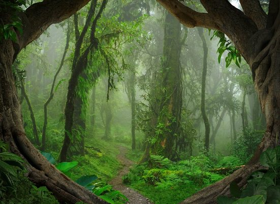 LIVINGWALLS Fototapete »Designwalls Tropical Forest«, Premium Vlies