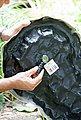 HEISSNER Bachlaufschale , BxTxH: 53x73x7 cm, felsgrau, Bild 4