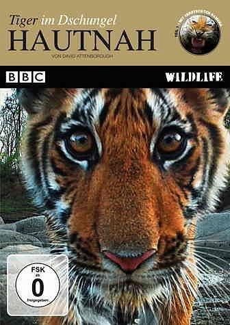 DVD »Hautnah - Tiger im Dschungel«