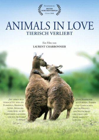 DVD »Animals in Love, 1 DVD-Video, deutsche u....«