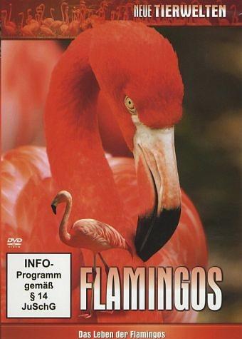 DVD »Flamingos«