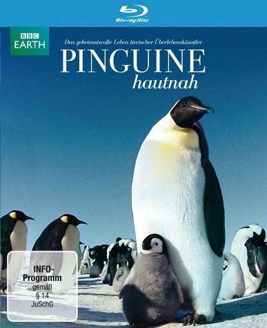 Blu-ray »Pinguine hautnah«