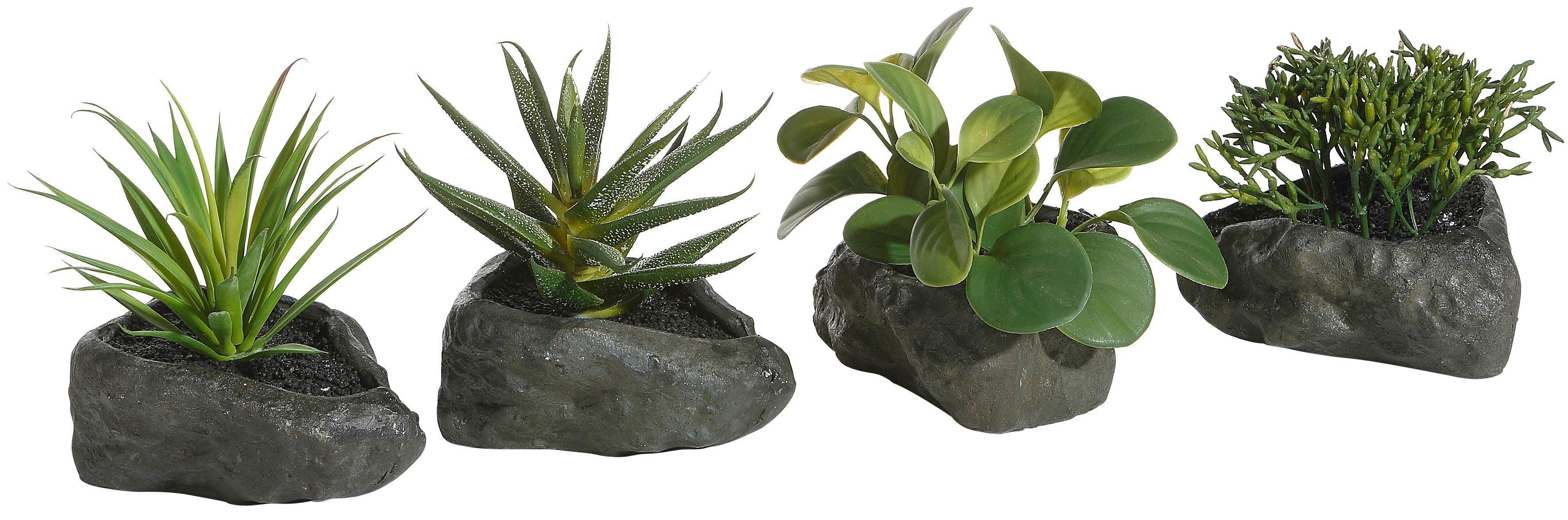 Home affaire Kunstpflanze »Sukkulenten« auf Steinen, (4-tlg.)