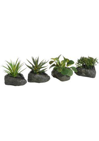 HOME AFFAIRE Dirbtinis augalas »Sukkulenten«