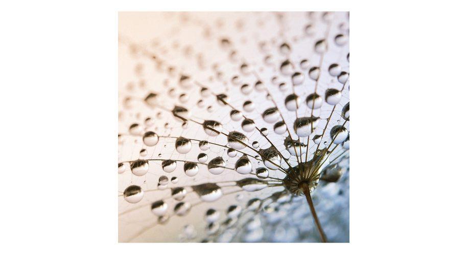 Glasbild, EUROGRAPHICS, »After The Rain«, 50/50 cm