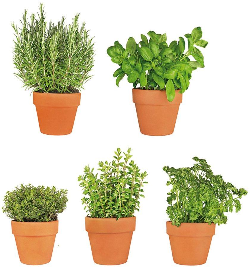 Fensterbilder, EUROGRAPHICS, »All My Herbs« in grün