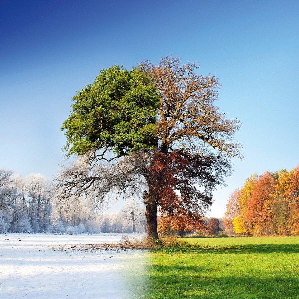 Glasbild, EUROGRAPHICS, »4 Seasons«, 50/50 cm in bunt