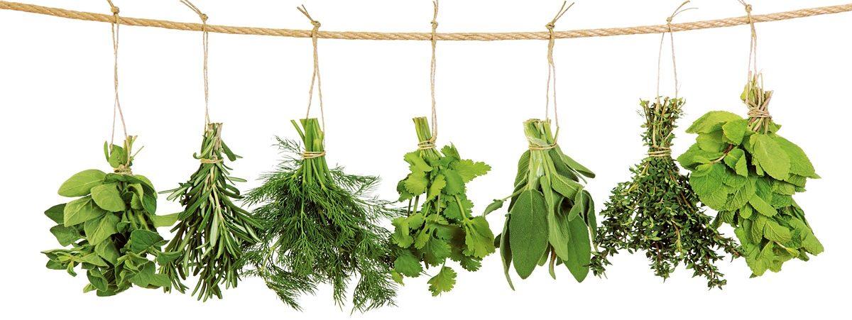 Glasbild, EUROGRAPHICS, »Hanging Herbs«, 80/30 cm