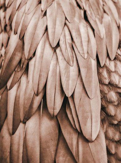 living walls Fototapete »ARTist Feathers«, (Set, 2 St), Palmenblätter, Vlies, glatt