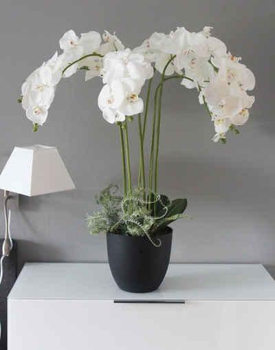 Kunstorchidee »Kunstpflanze KP8100« Orchidee Weiß, Arnusa, Höhe 110 cm, XXL fertig im Topf