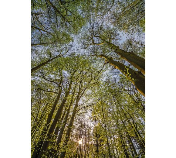 Fototapete, Komar, »Canopy«, 184/254 cm