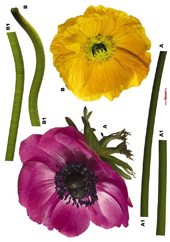 Decosticker, Komar, »Anemone« in bunt