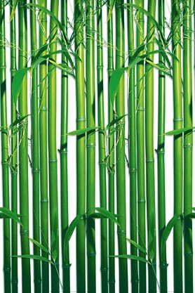 Wandtapete, Home affaire, »Bamboo«, 183/254 cm in grün
