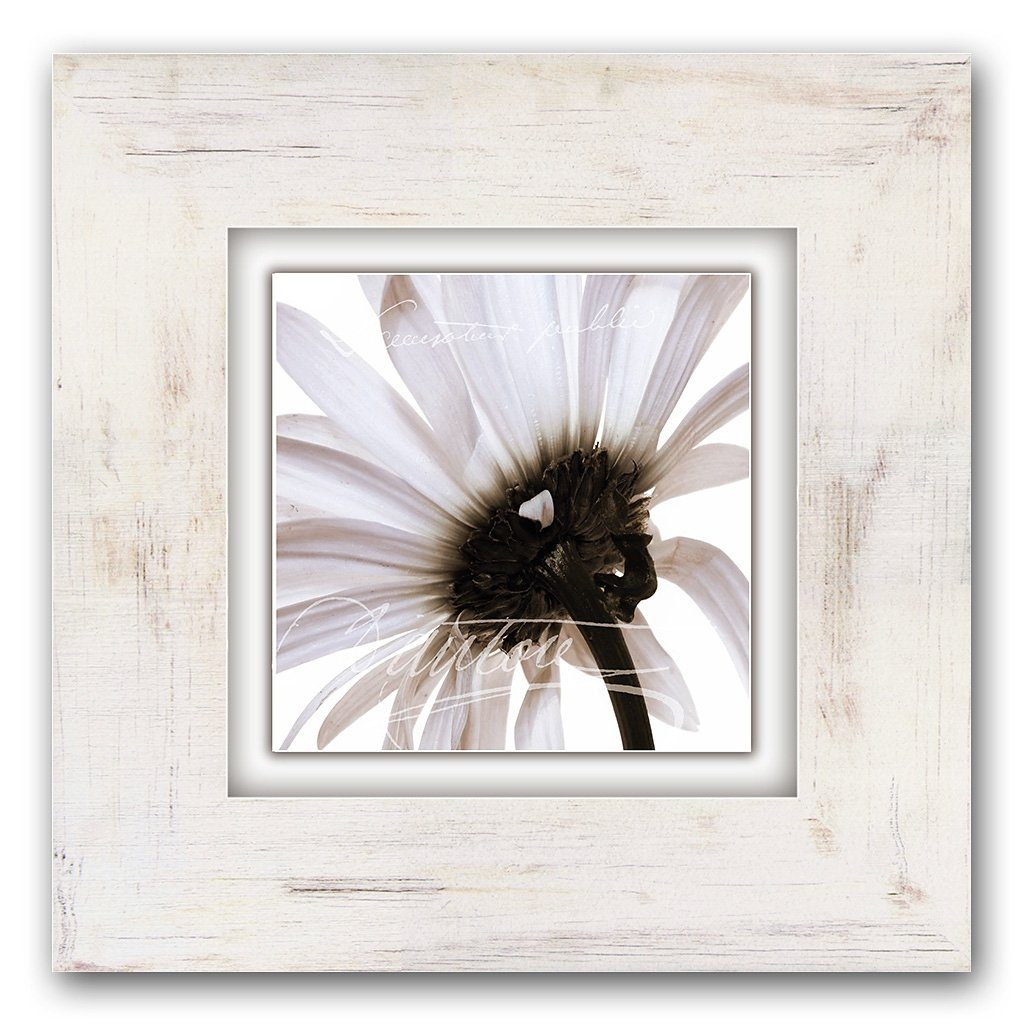 Home affaire Bild »Zartrosa Blüte«, Blume, Blume