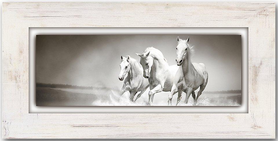 Holzbild, Home affaire, »Schimmel«, 80/40 cm in creme/weiß