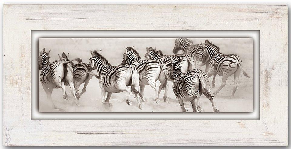 Holzbild, Home affaire, »Zebras«, 80/40 cm in creme