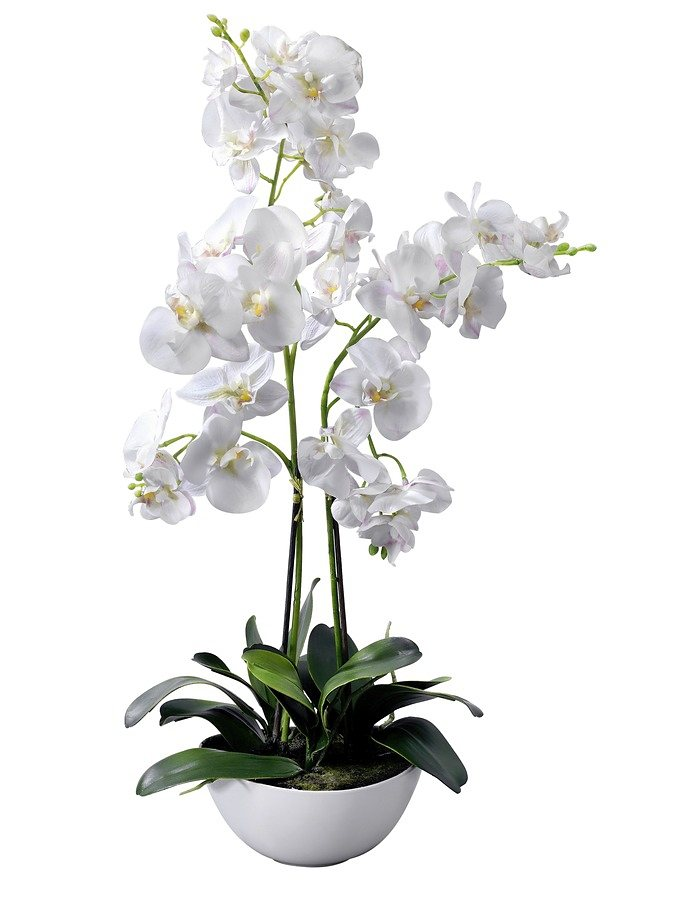Orchidee in weiß