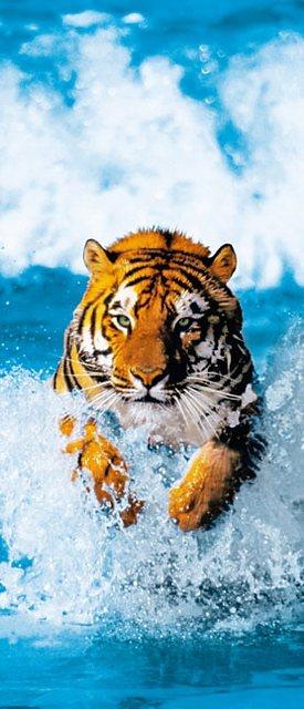 Home affaire Türposter, Bengal Tiger, 86/200 cm