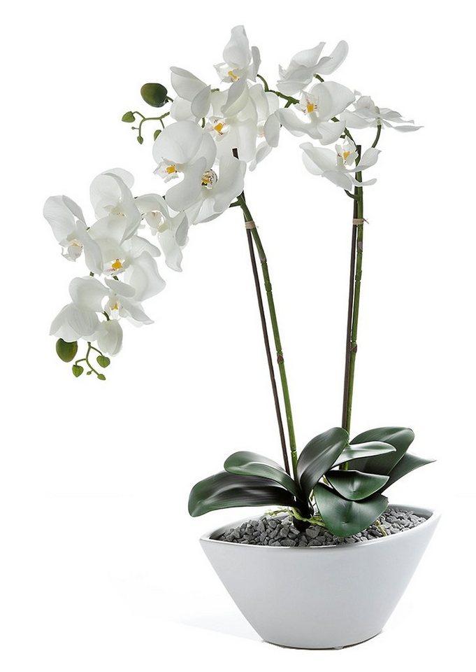 home affaire kunstblume orchidee in einer keramikschale online kaufen otto. Black Bedroom Furniture Sets. Home Design Ideas