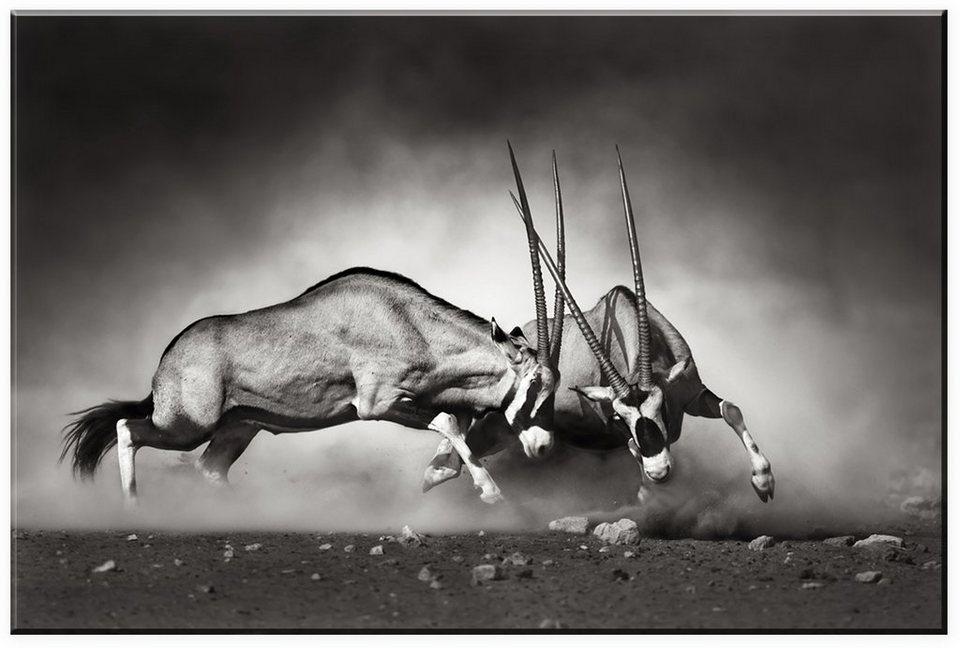 Leinwandbild, Home affaire, »Das Duell«, in 2 Größen in grau/schwarz