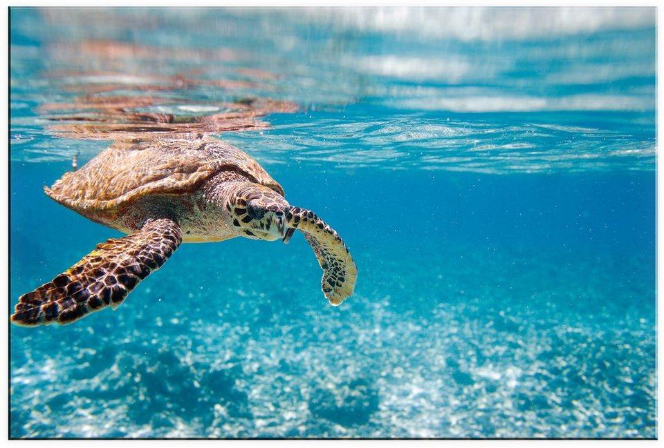 Premium collection by Home affaire Acrylglasbild »Schildkröte auf Reisen«, in 2 Größen in blau